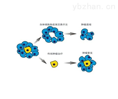 FNDC8抗原,Ⅲ型纤维连接蛋白域蛋白8抗原