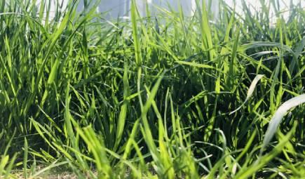 农业+技术 土壤水分测定仪为农业节约水分